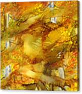 Sunlight Dancing In The Aspen Forest Canvas Print