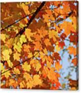 Sunlight In Maple Tree Canvas Print