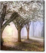 Sunlight In The Meadow Canvas Print