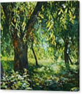 Sunlight Into The Willow Trees Canvas Print
