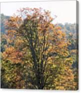 Sunlight On Autumn Foliage Canvas Print
