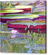 Sunlight On Lily Pads Canvas Print