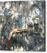 Sunlight On Mossy Tree Canvas Print