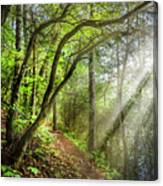 Sunlight On The Trail Canvas Print