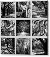 Sunlight Through Live Oaks Collage Canvas Print