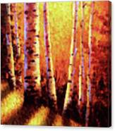 Sunlight Through The Aspens Canvas Print