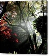 Sunlight Through The Tree In Misty Morning 1. Canvas Print