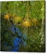 Sunlight Through Trees Canvas Print