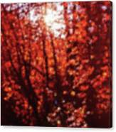 Sunlight Thru Autumn Leaves Abstract Canvas Print