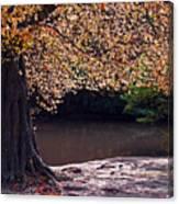 Sunlit Autumn Canopy Canvas Print