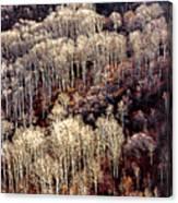 Sunlit Bare Autumn Aspens 2 Canvas Print