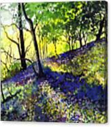 Sunlit Bluebell Wood Canvas Print