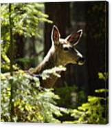 Sunlit Deer Friend Canvas Print