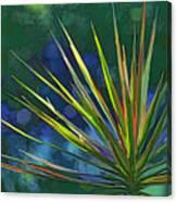 Sunlit Dracaena Marginata Canvas Print