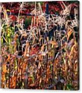 Sunlit Fall Corn Canvas Print