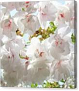 Sunlit Flowers Art Prints White Tree Blossoms Baslee Troutman Canvas Print