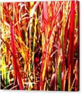 Sunlit Grass Canvas Print