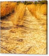 Sunlit Grasses Canvas Print