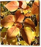 Sunlit Lilac Leaves Canvas Print