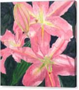 Sunlit Lilies Canvas Print