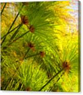 Sunlit Paparus Canvas Print
