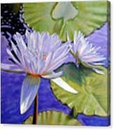 Sunlit Petals Canvas Print