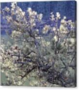 Sunlit Pine Cones Canvas Print