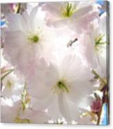Sunlit Pink Blossoms Art Print Spring Tree Blossom Baslee Canvas Print