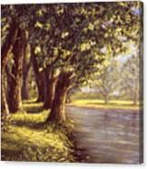 Sunlit Riverbank Canvas Print