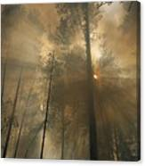 Sunlit Smoke Whispers The Firefighters Canvas Print