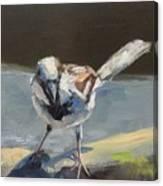 Sunlit Sparrow Canvas Print