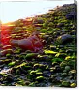 Sunlit Stones Canvas Print