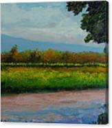 Sunlit Vinyard Canvas Print