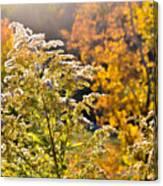 Sunlit Wildflower Canvas Print