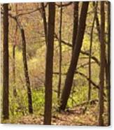 Sunlit Woods Canvas Print