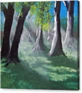 Sunlit Woods Canvas Print