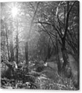 Sunlit Woods, West Dipton Burn Canvas Print
