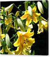 Sunlit Yellow Lilies Art Prints Botanical Giclee Baslee Troutman Canvas Print