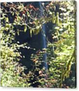Sunlite Silver Falls Canvas Print