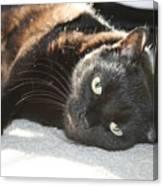 Sunning Black Cat Canvas Print