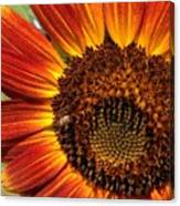 Sunny And Bright Today.  Canvas Print