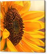 Sunny Beauty Canvas Print