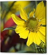 Sunny Blooms Canvas Print