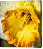 Sunny Daffodil Canvas Print
