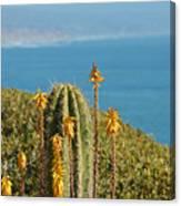 Sunny Day In California Canvas Print