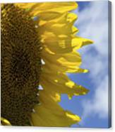 Sunny Faces And Blue Skies Canvas Print