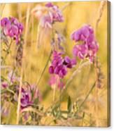 Sunny Garden 1 Canvas Print