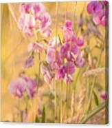 Sunny Garden 3 Canvas Print