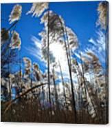 Sunny Marsh Beauty Canvas Print