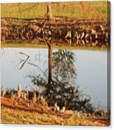 Sunny Pond Canvas Print